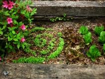 Grow Gratitude Garden