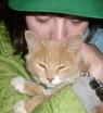 kity kitty