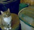 Barn cat, barn rat