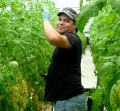 Tomato Expert